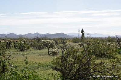 Desert So Green