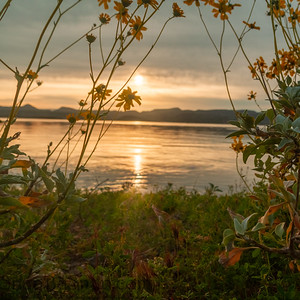 Brittlebush framing a sunrise over a lake with focus on the flowers