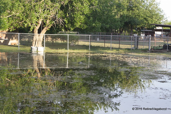 Flood Irrigation here at my Daughters in Meza, Az