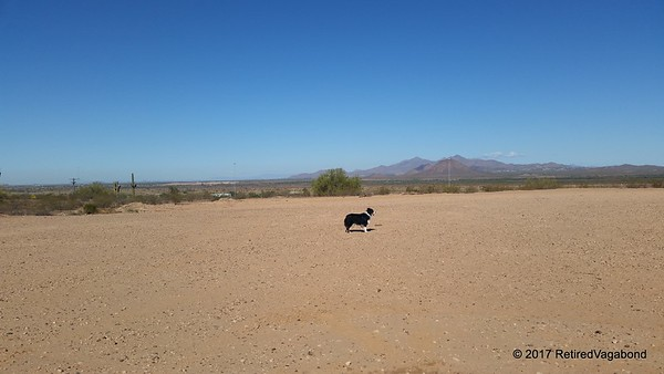 Playing in the Desert