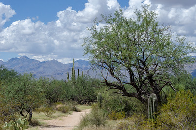 20180902-Saguaro-NP-East-4346