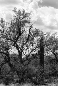 20180902-Saguaro-NP-East-4317