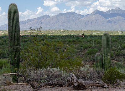 20180902-Saguaro-NP-East-4283