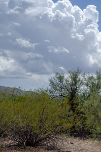 20180902-Saguaro-NP-East-4316