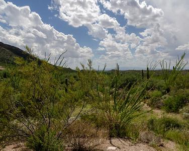 20180902-Saguaro-NP-East-4372