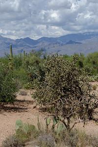 20180902-Saguaro-NP-East-4321