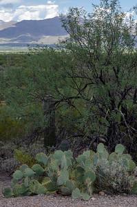 20180902-Saguaro-NP-East-4286