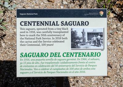20180902-Saguaro-NP-East-4239