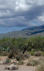 20180902-Saguaro-NP-East-4311