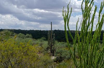 20180902-Saguaro-NP-East-4266