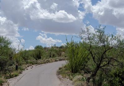 20180902-Saguaro-NP-East-4299