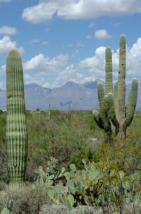 20180902-Saguaro-NP-East-4231