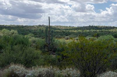 20180902-Saguaro-NP-East-4272