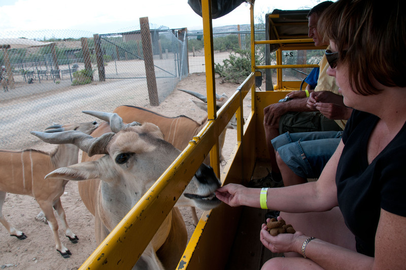 Charla hand feeding animals on a guided tour of a free roaming area in the Out of Africa Wildlife Park Near Sedona, Arizona.  Click on Map This to view a satellite map pinpointing where each of where these photos was taken.