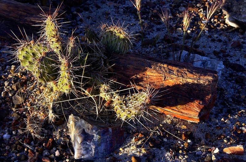 Petrified Forest National Park near Holbrook, Arizona.  Close-up of petrified logs and cactus.