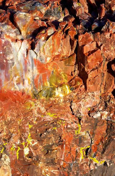 Petrified Forest National Park near Holbrook, Arizona.        Close-up of petrified wood.