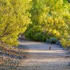 Rabbit on an Arizona Trail Under Verde Trees in Bloom