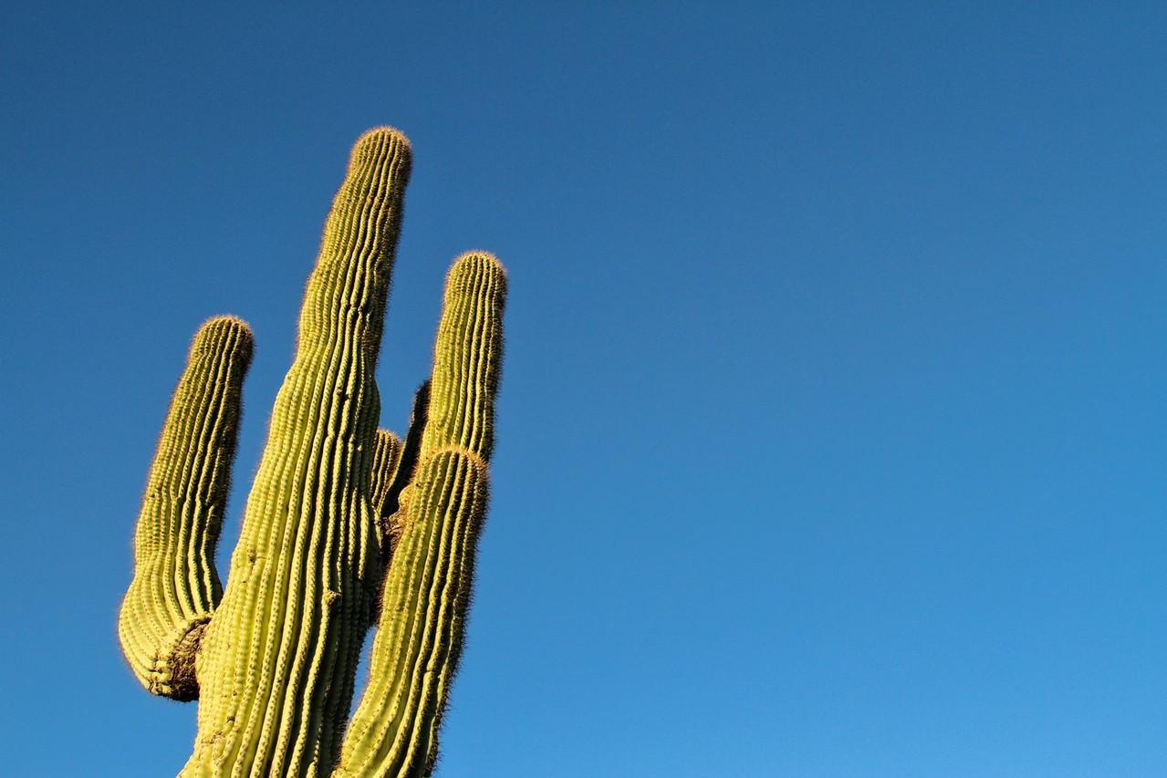 Saguaro with Blue Copy Space