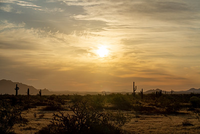 Sunset over the Sonoran Desert of Arizona with saguaro cacti