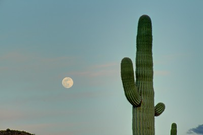 Moon rise over the Sonoran Desert