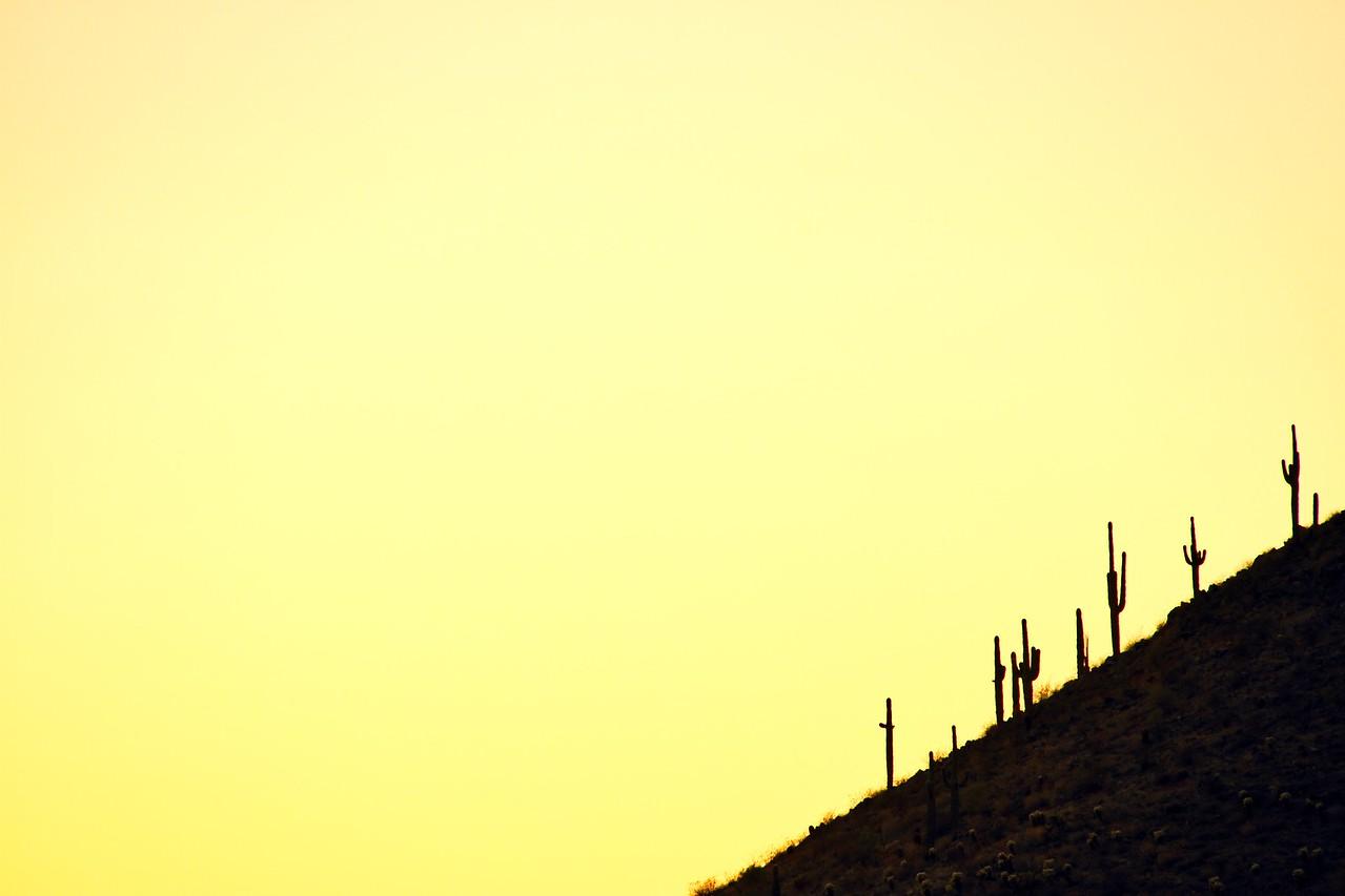 Cactus on Hillside Silhouette