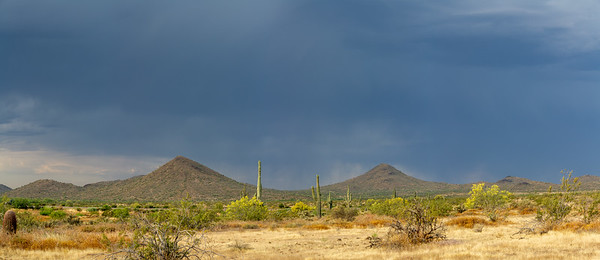Panorama of the Sonoran Desert with saguaro cacti and a storm over the mountains