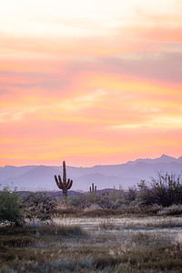 A desert sunset with a saguaro cactus silhouetted against the evening sky in the Sonoran