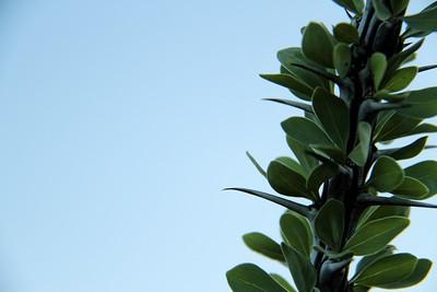 Cactus Thorn Detail
