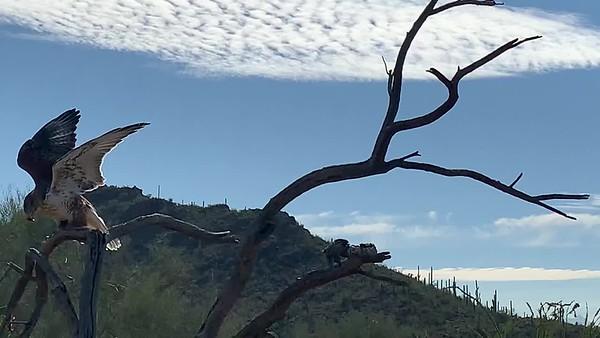 Brief Raptor Free-flight video