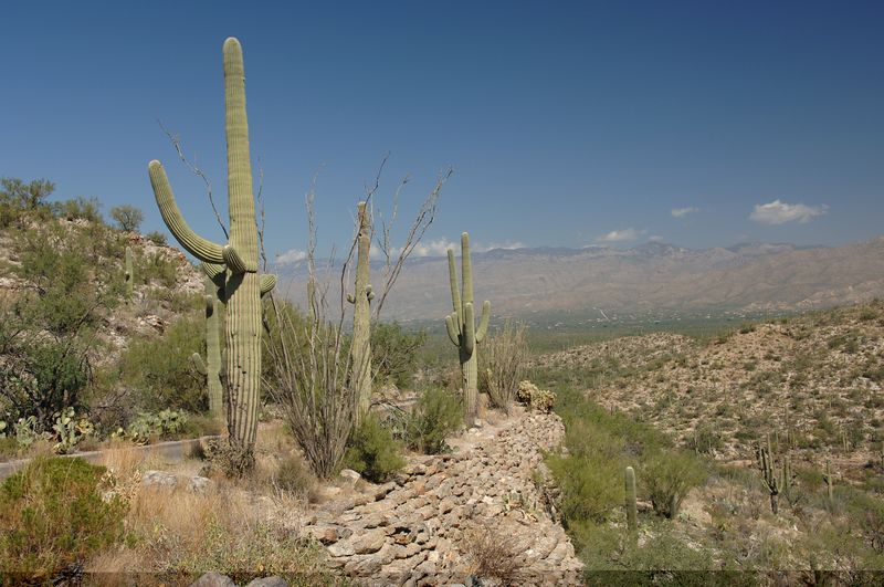 Saguaro National Park<br>Oct 5 2005 - NE Caravan Day 5