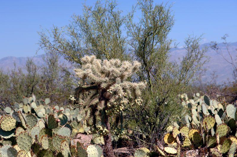 Saguaro National Park<br>Oct 5 2005 - NE Caravan Day 5