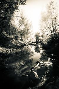 Dreamlike Creek in A Forest
