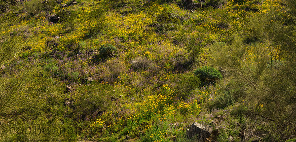 Hillside Covered in Spring Plants