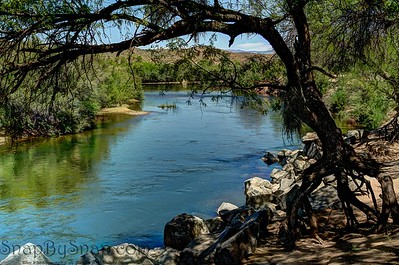 Desert River Framed by Tree
