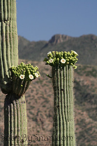 Cactus in Tonto National Forest in Arizona.