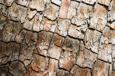 Highly detailed tree bark