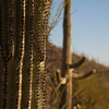 Tucson Sonoran Desert Museum