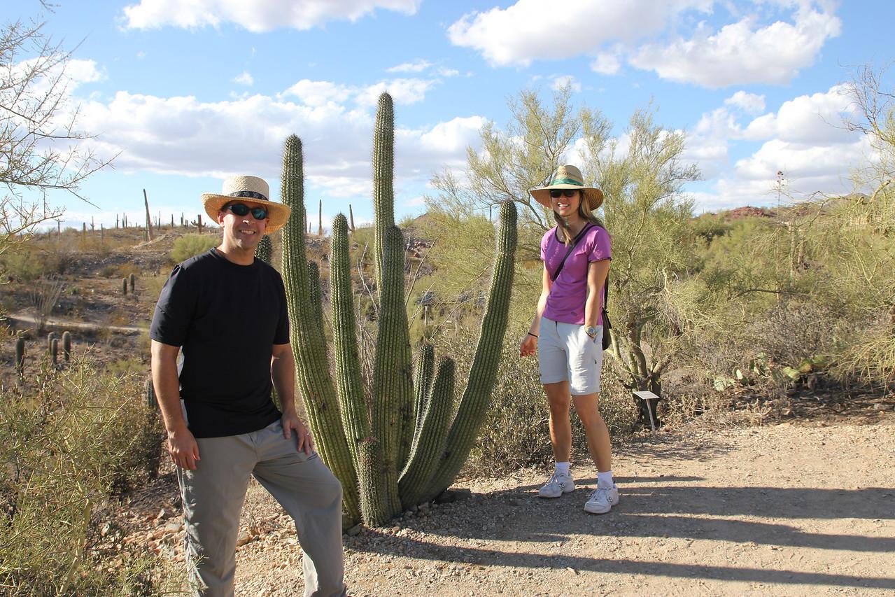 Desert Museum - Organ Cactus
