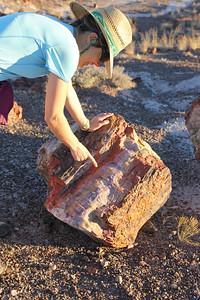 Petrified Forest National Park - The sediments containing the fossil logs are part of the widespread and colorful Chinle Formation, from which the Painted Desert gets its name.