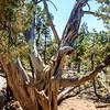 Rim Trail. Grand Canyon Village. Grand Canyon National Park, AZ