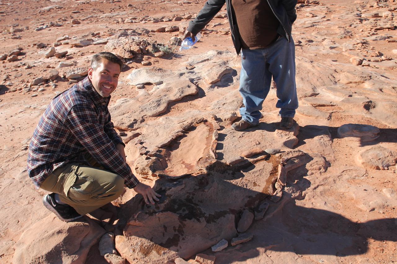 Dinosaur Tracks - Tyrannosaurus Rex!  That's a big footprint.