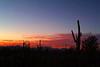 Sonoran desert scene in southern Arizona, USA.