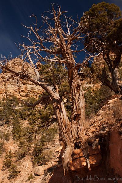 The Grand Canyon - South Rim