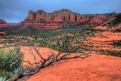 Ode to a dead branch - Sedona AZ