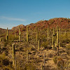 Saguaro National Forest - Tucson