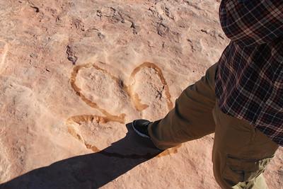 Dinosaur Tracks - Allosaurus tracks