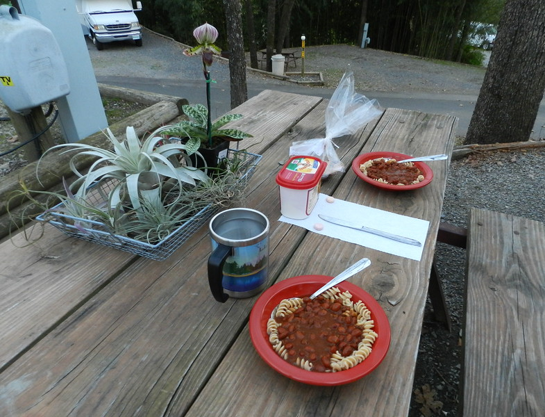Hot Springs KOA dinner with air plants and orchid.