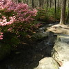 Garvan Woodland Gardens, near Hot Springs, AR
