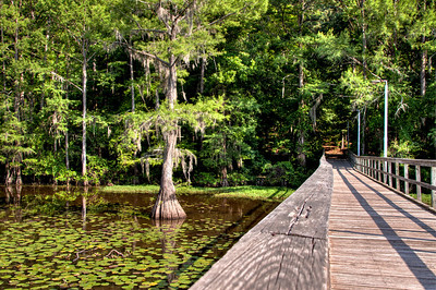 Bridge to the Pier - Caddo Lake, TX