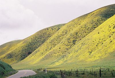 3/20/05 Coreopsis covered hills off Hwy 58 through the Temblor Mountains (descending into Carrizo Plain). San Luis Obispo County, CA